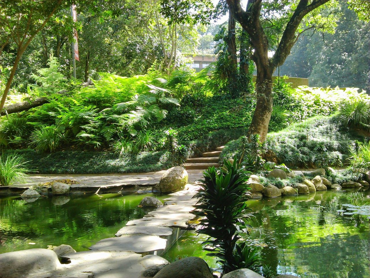 High Angle View Of Walkway Amidst Ponds In Park
