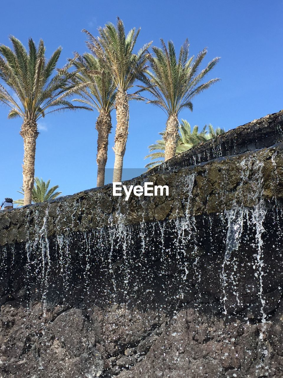 tree, plant, palm tree, tropical climate, sky, nature, water, growth, no people, day, clear sky, low angle view, outdoors, beauty in nature, blue, sunlight, scenics - nature, motion, waterfall, flowing water