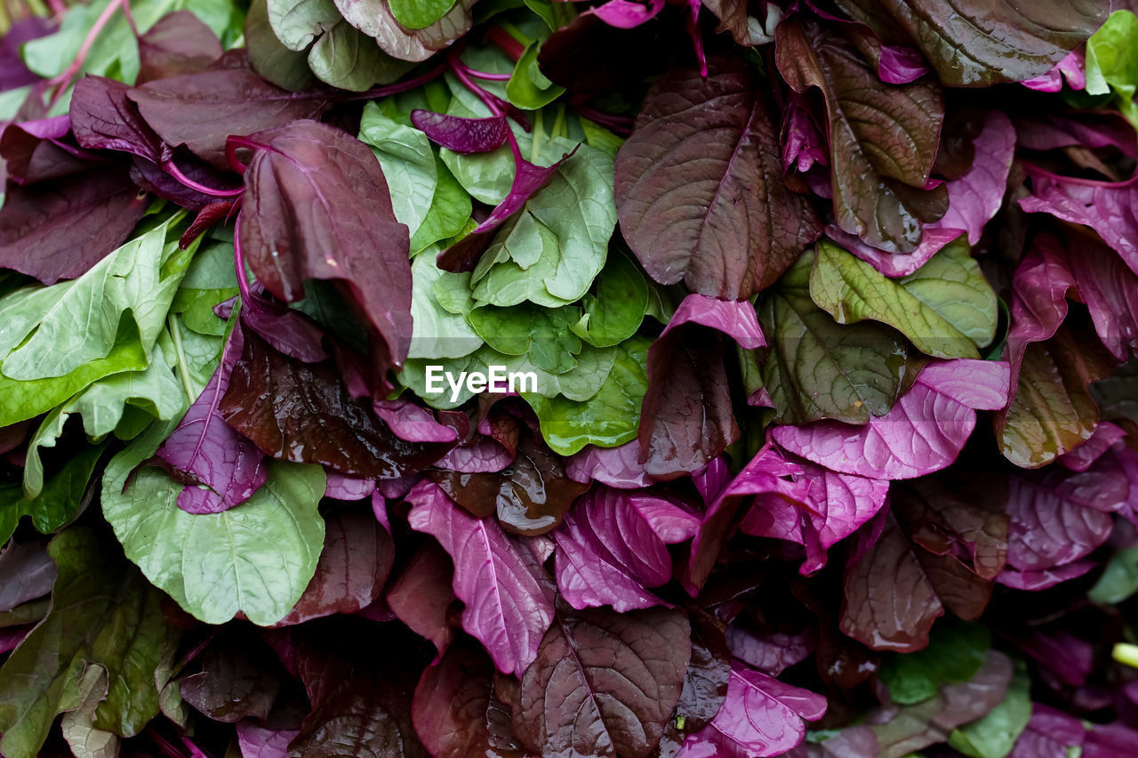 Full Frame Shot Of Leaf Vegetables