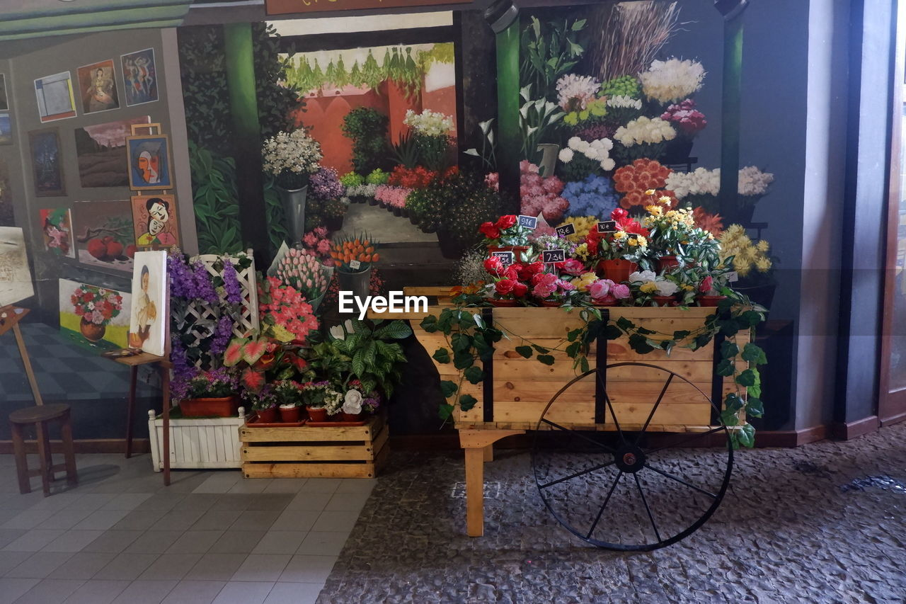flower, flowering plant, plant, no people, retail, store, business, for sale, choice, multi colored, freshness, potted plant, small business, variation, arrangement, window, collection, retail display, indoors, glass - material, flower arrangement, bouquet, flower head, bunch of flowers