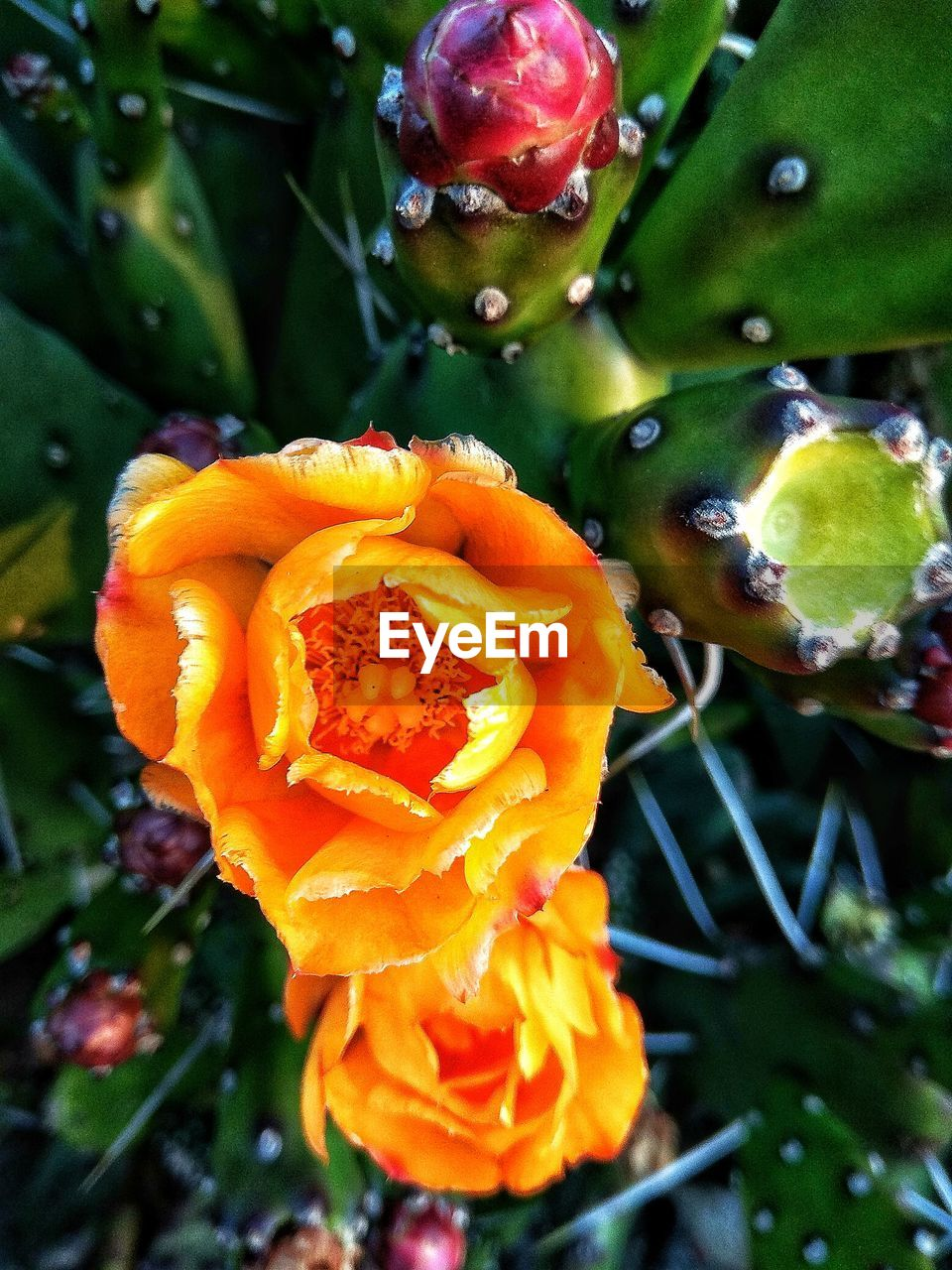 freshness, flower, beauty in nature, nature, growth, fragility, petal, orange color, outdoors, close-up, drop, no people, day, plant, flower head, blooming