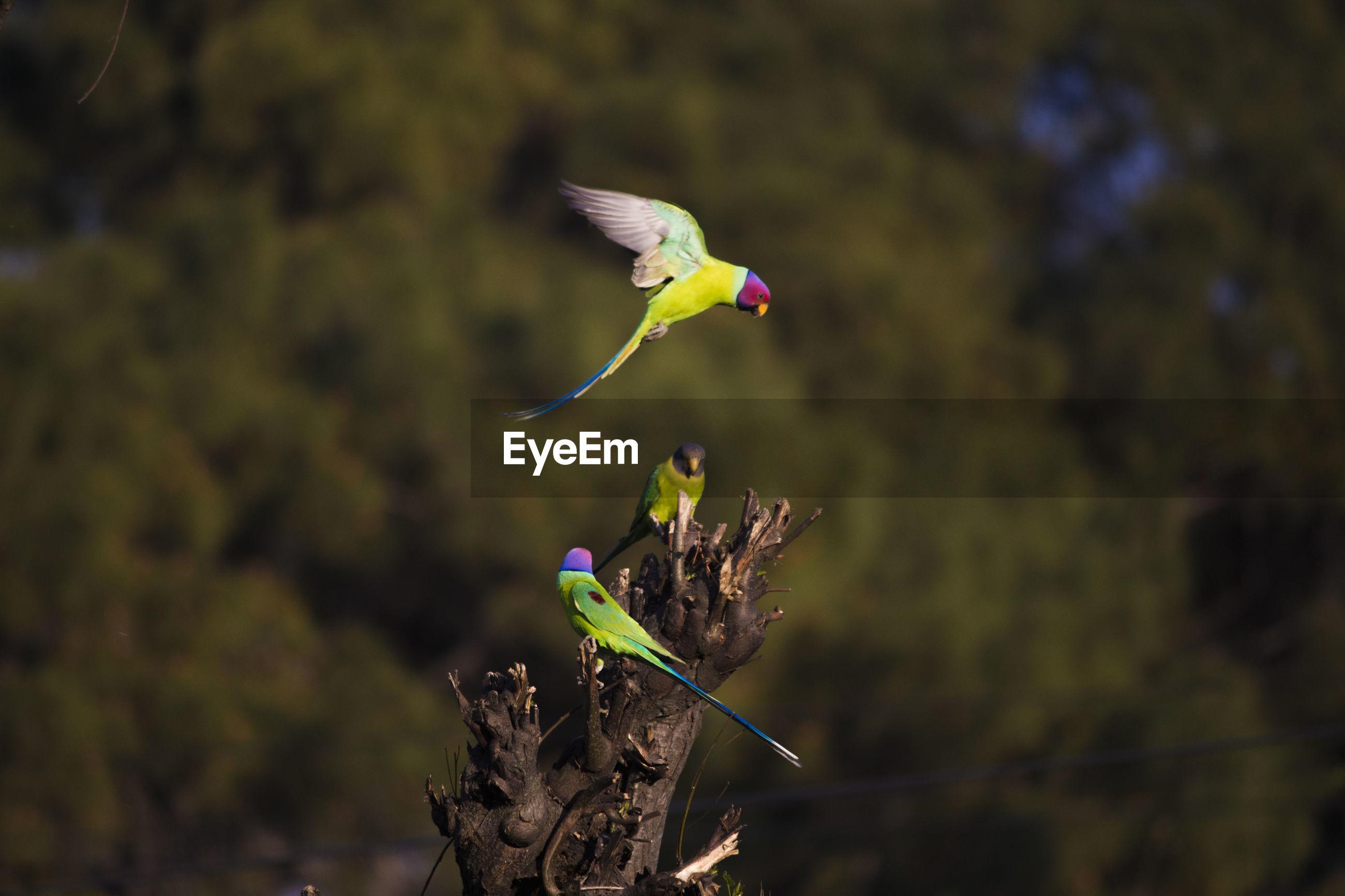 Close-up of parrots