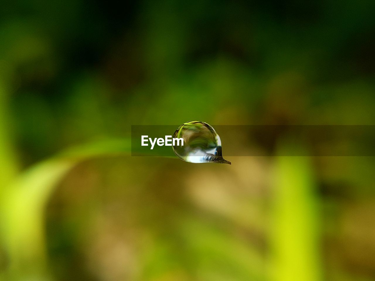 close-up, green color, focus on foreground, plant, no people, nature, animals in the wild, animal wildlife, growth, day, animal themes, selective focus, beauty in nature, animal, one animal, fragility, vulnerability, mid-air, outdoors, purity, blade of grass