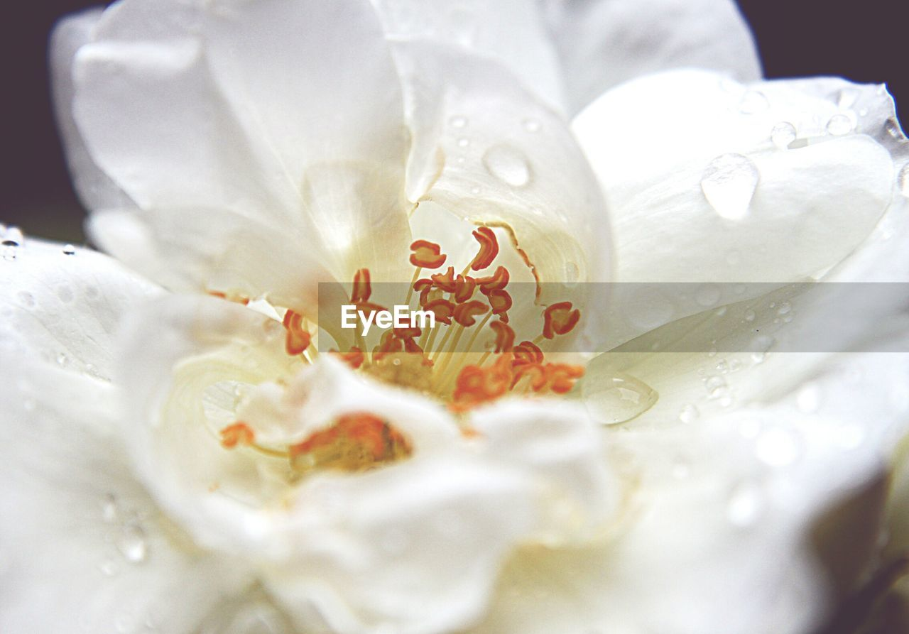 text, white color, close-up, food and drink, freshness, no people, flower, food, sweet food, celebration, petal, dessert, indoors, flower head, beauty in nature, day, nature, ready-to-eat