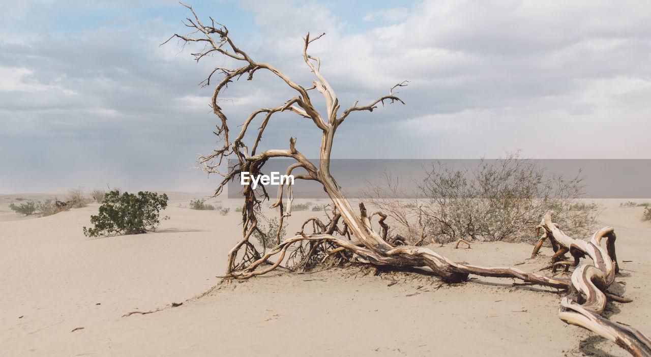 Bare Tree On Sand Against Sky
