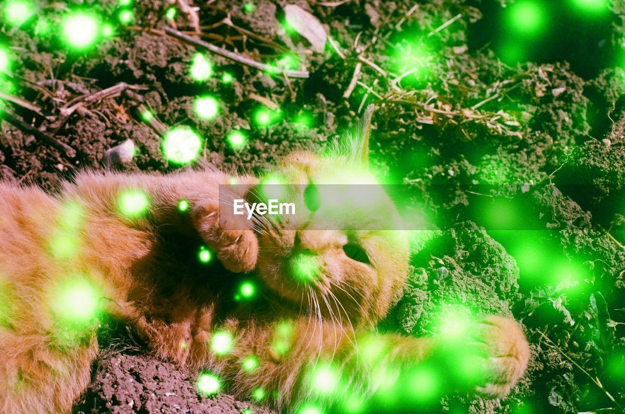 no people, green color, one animal, animal, mammal, animal themes, cat, plant, feline, domestic cat, nature, land, vertebrate, close-up, tree, high angle view, domestic, selective focus, outdoors, pets