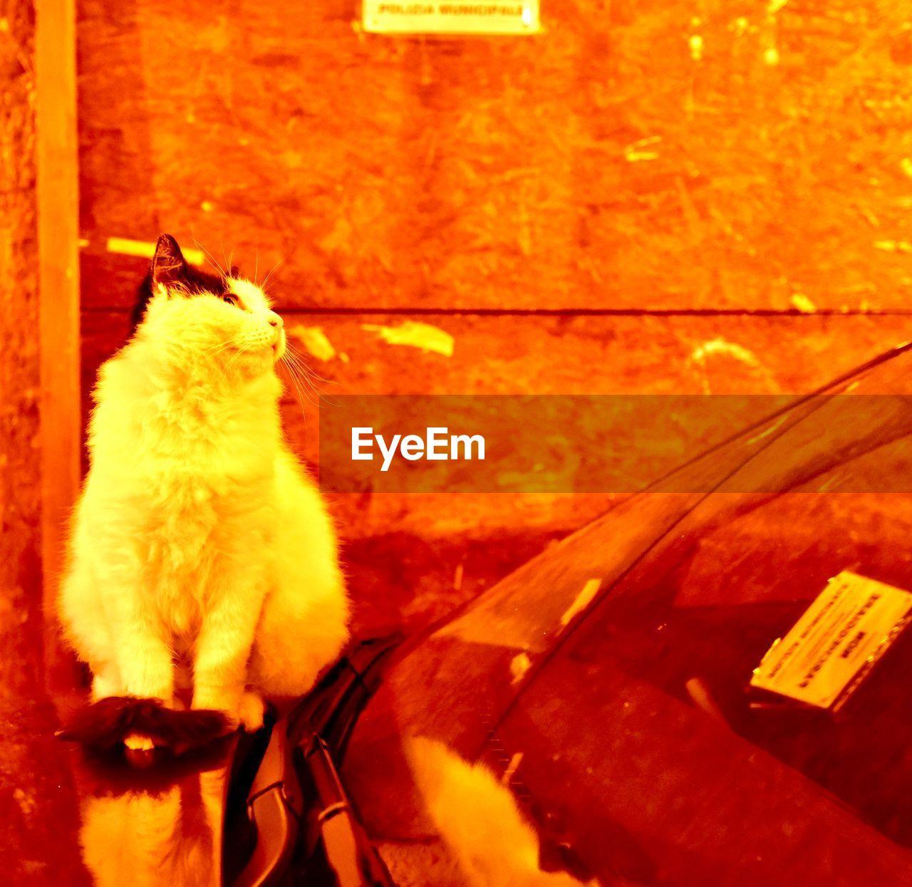domestic, animal, animal themes, one animal, mammal, domestic animals, pets, vertebrate, cat, no people, domestic cat, feline, transportation, sitting, nature, indoors, canine, looking, dog, mode of transportation