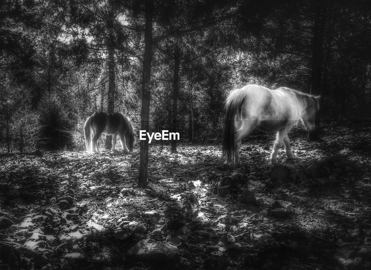 animal themes, mammal, tree, domestic animals, field, nature, no people, day, outdoors, forest, animals in the wild, landscape, beauty in nature