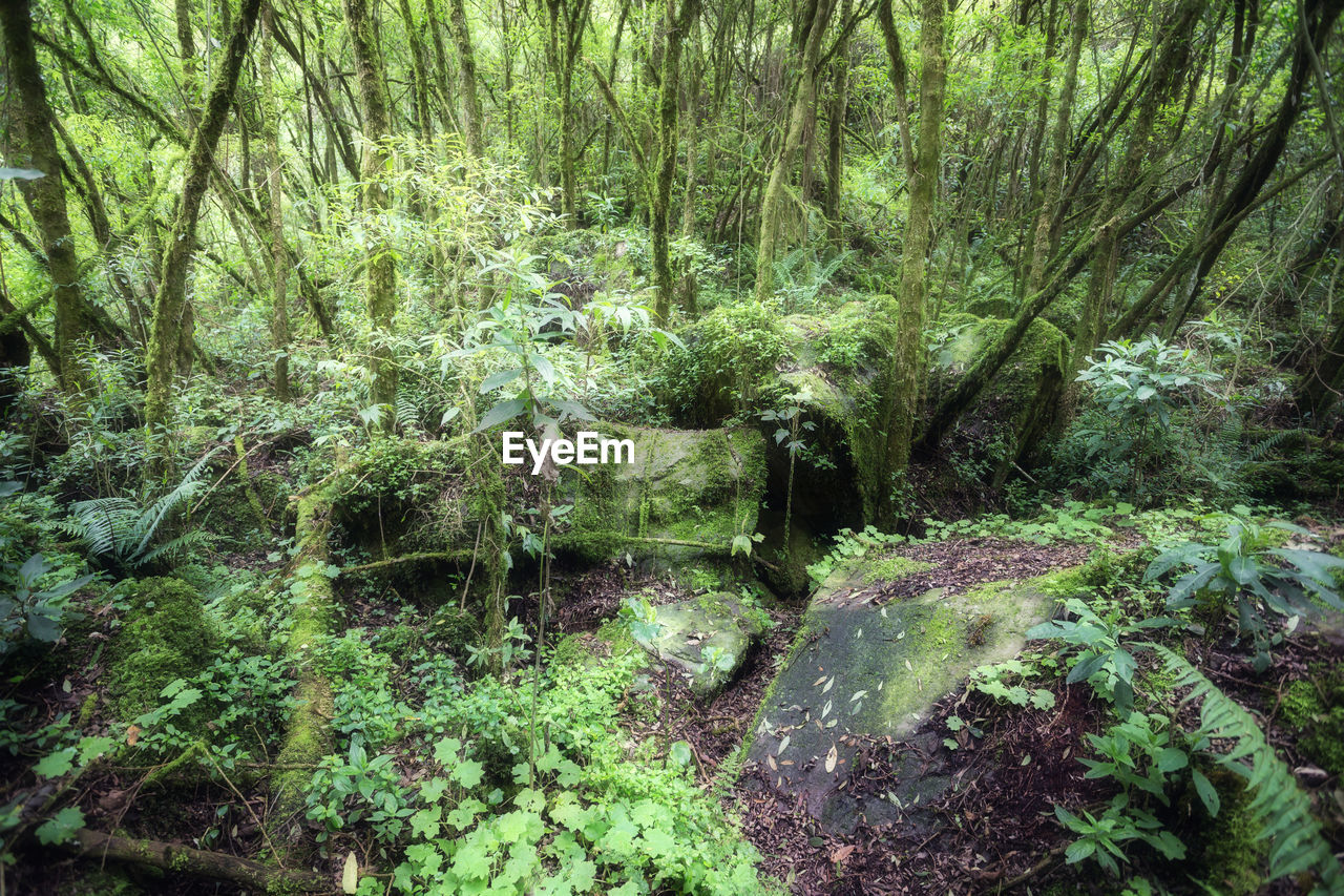 forest, tree, plant, land, water, nature, growth, tranquility, no people, green color, beauty in nature, scenics - nature, day, lush foliage, environment, foliage, non-urban scene, tranquil scene, woodland, outdoors, flowing water, rainforest, flowing, stream - flowing water