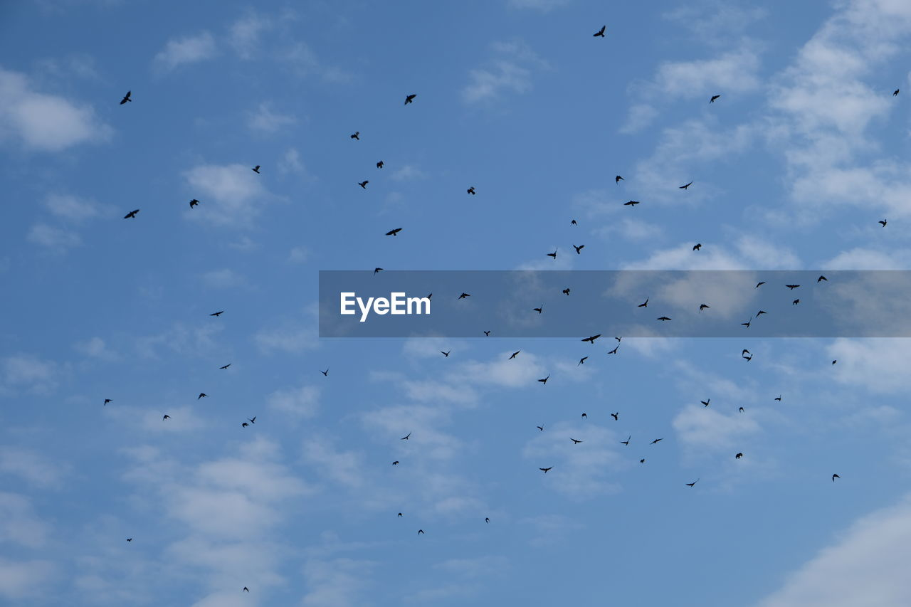 bird, vertebrate, animal wildlife, cloud - sky, animal, animal themes, group of animals, animals in the wild, sky, flying, low angle view, large group of animals, flock of birds, mid-air, nature, blue, beauty in nature, no people, day, outdoors