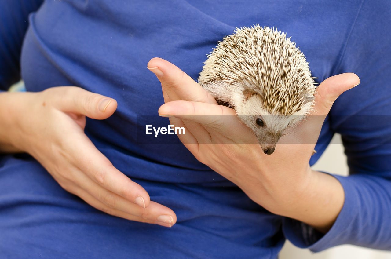 one animal, mammal, midsection, one person, human hand, hedgehog, holding, real people, vertebrate, animal wildlife, hand, pets, domestic, casual clothing, domestic animals, rodent, lifestyles, pet owner, care