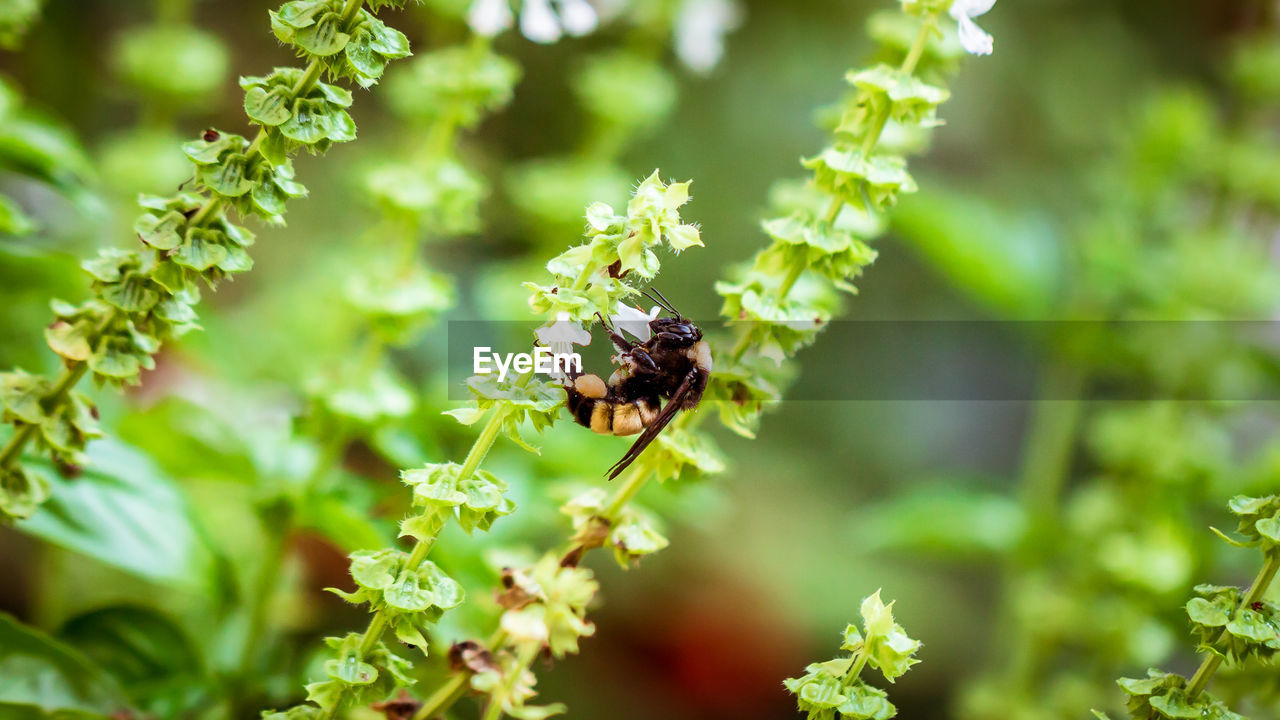 invertebrate, animal wildlife, animals in the wild, animal themes, animal, insect, one animal, plant, beauty in nature, growth, bee, nature, day, green color, selective focus, flower, focus on foreground, flowering plant, no people, pollination, outdoors, flower head