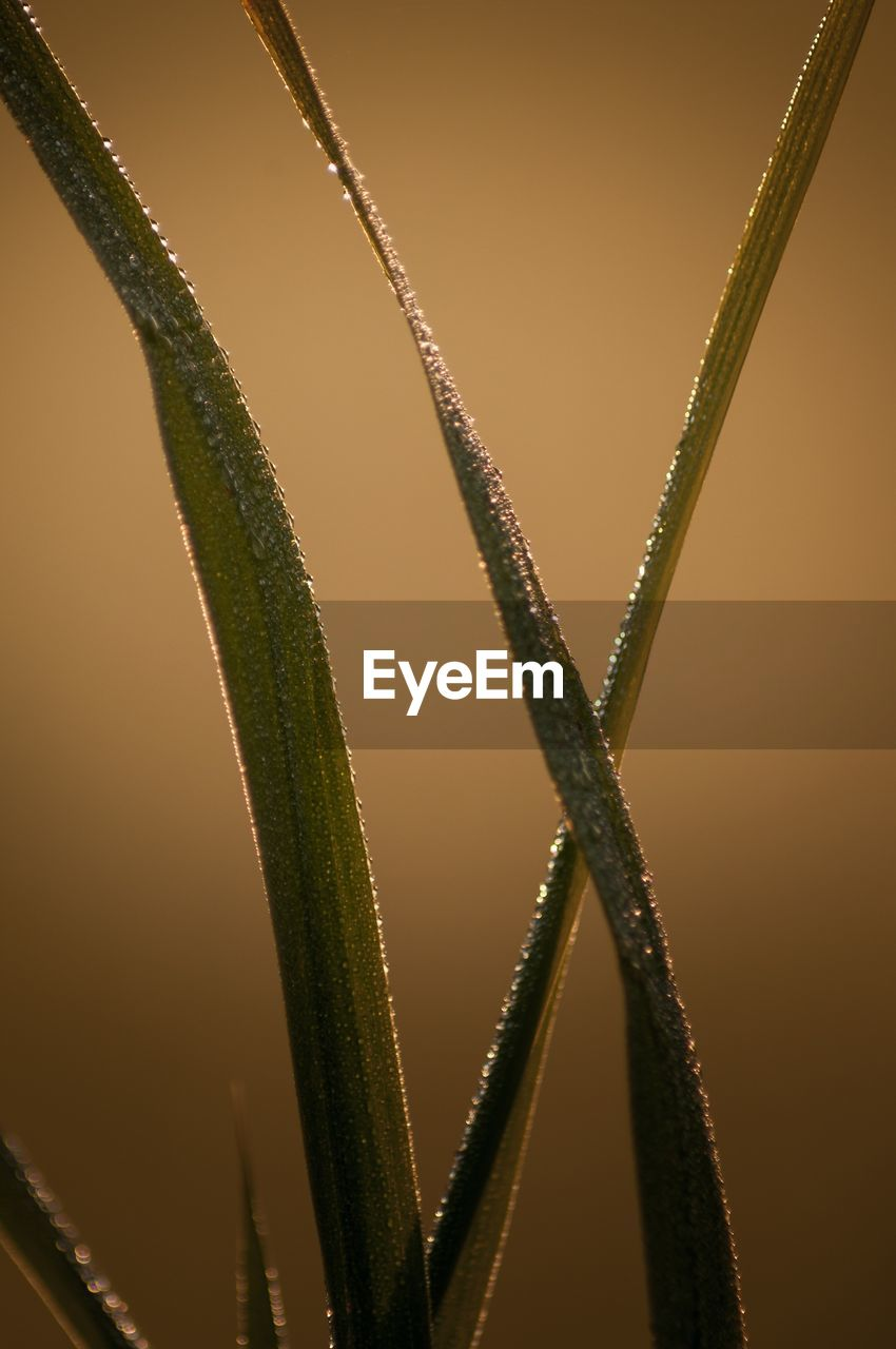 no people, close-up, nature, selective focus, focus on foreground, beauty in nature, growth, outdoors, plant, metal, day, green color, pattern, full frame, backgrounds, detail, sunset, wet, tranquility, blade of grass, dew