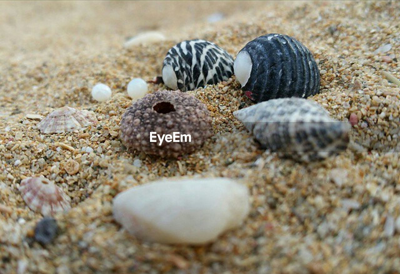animal themes, sand, beach, sea life, animals in the wild, nature, close-up, no people, seashell, hermit crab, one animal, day, sea, animal wildlife, beauty in nature, outdoors
