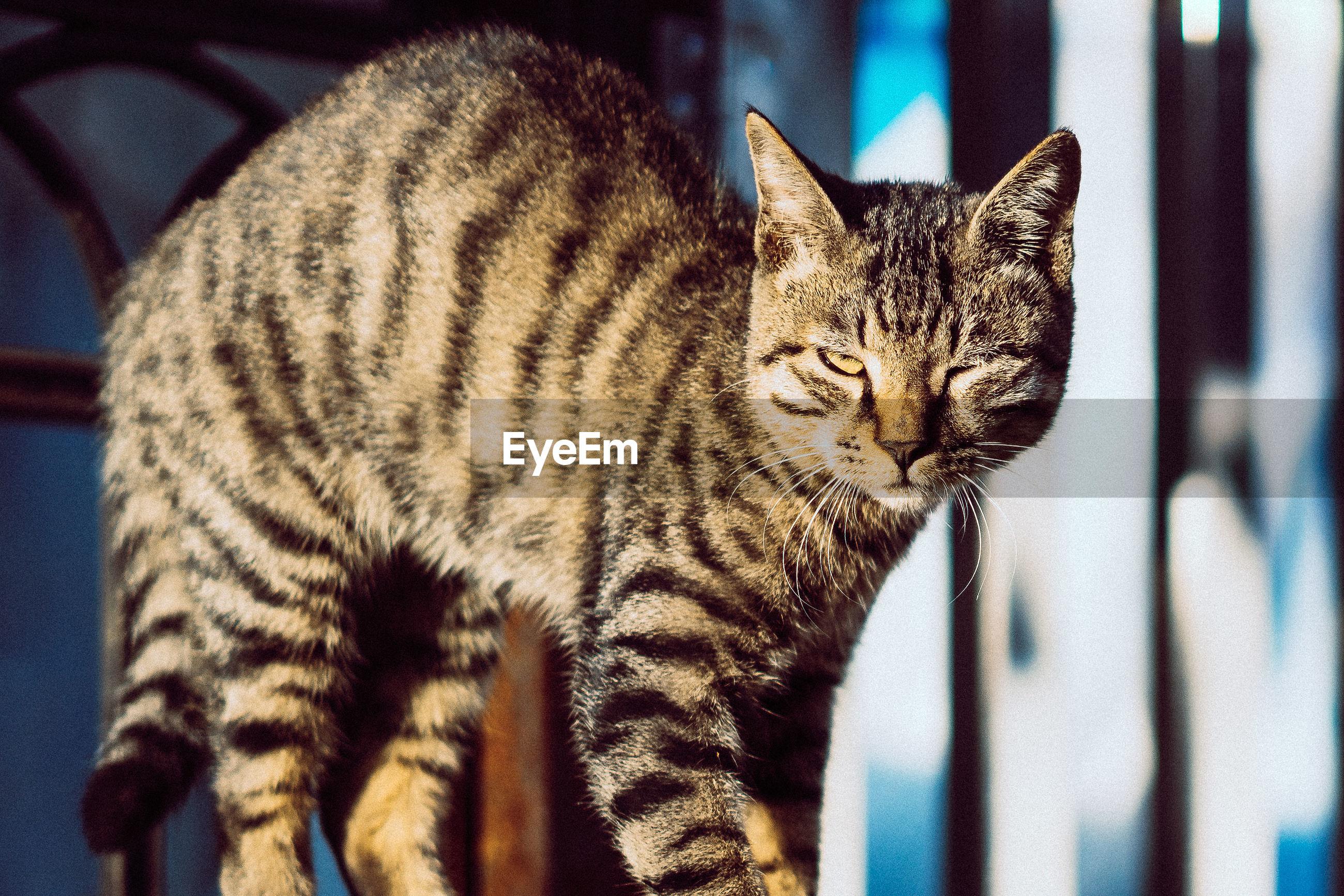 Close-up portrait of cat standing indoors