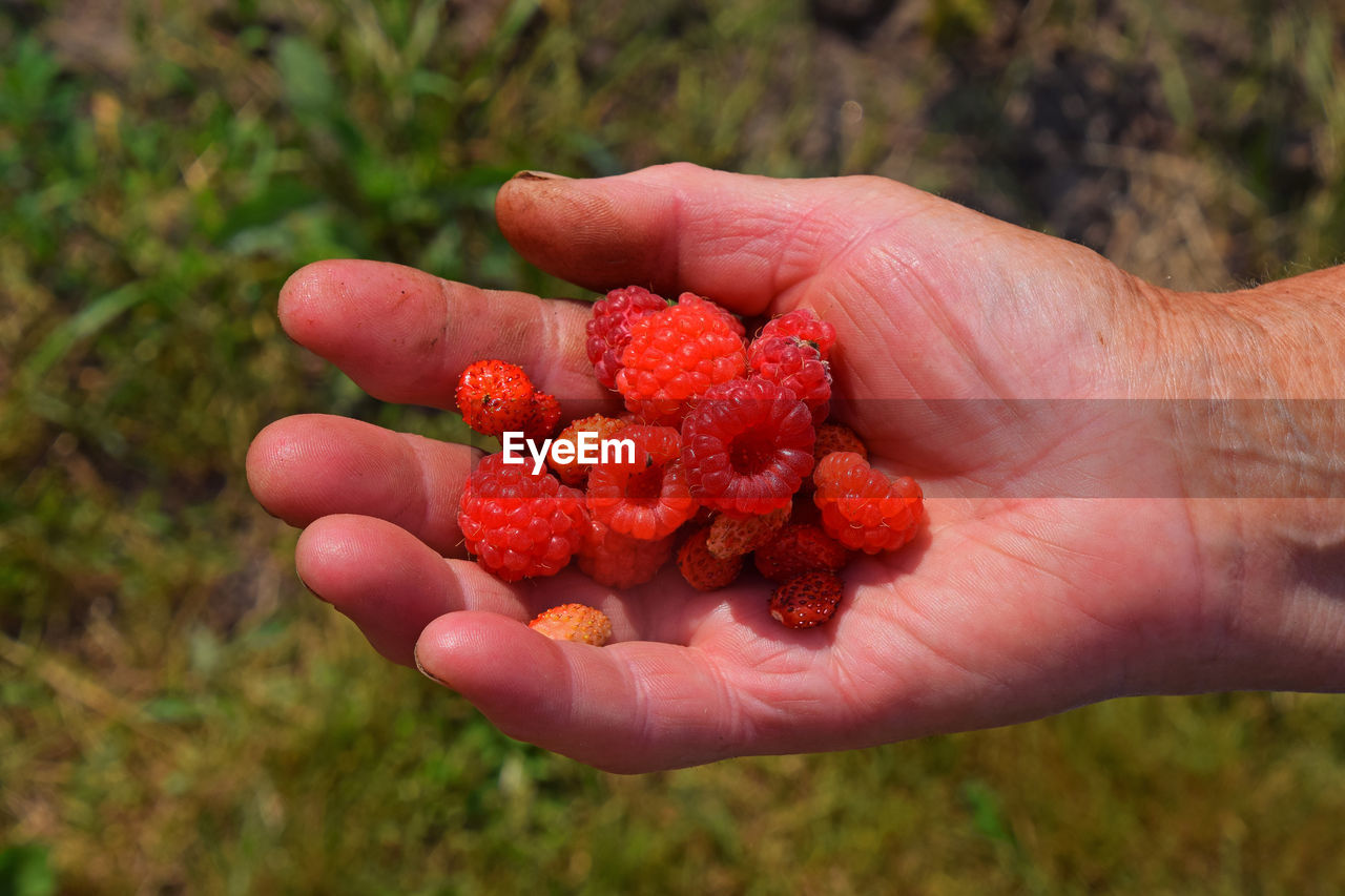 human hand, fruit, human body part, food and drink, healthy eating, one person, food, outdoors, focus on foreground, real people, holding, freshness, red, day, close-up, nature, people