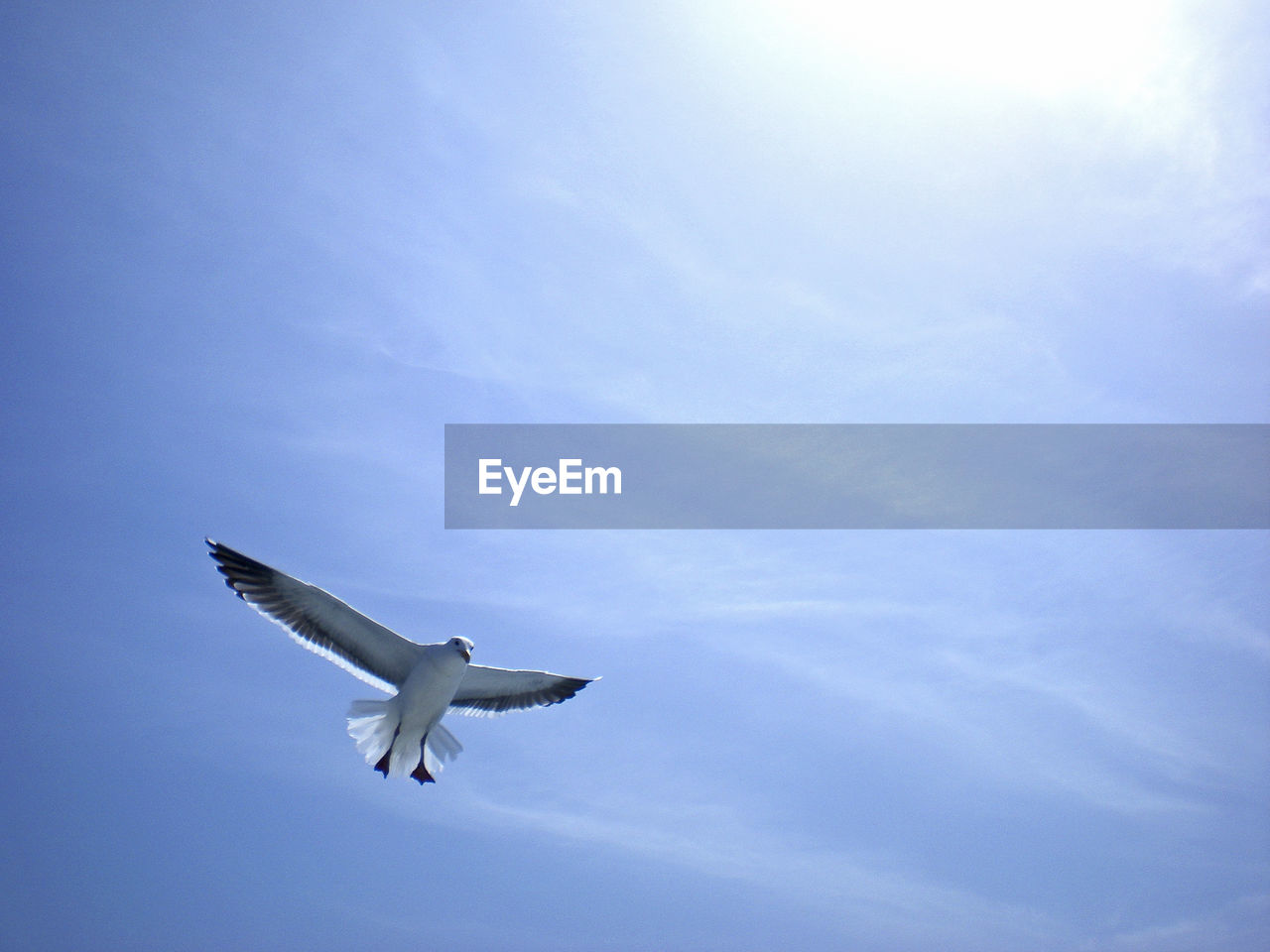 Low angle view of seagull against sky on sunny day