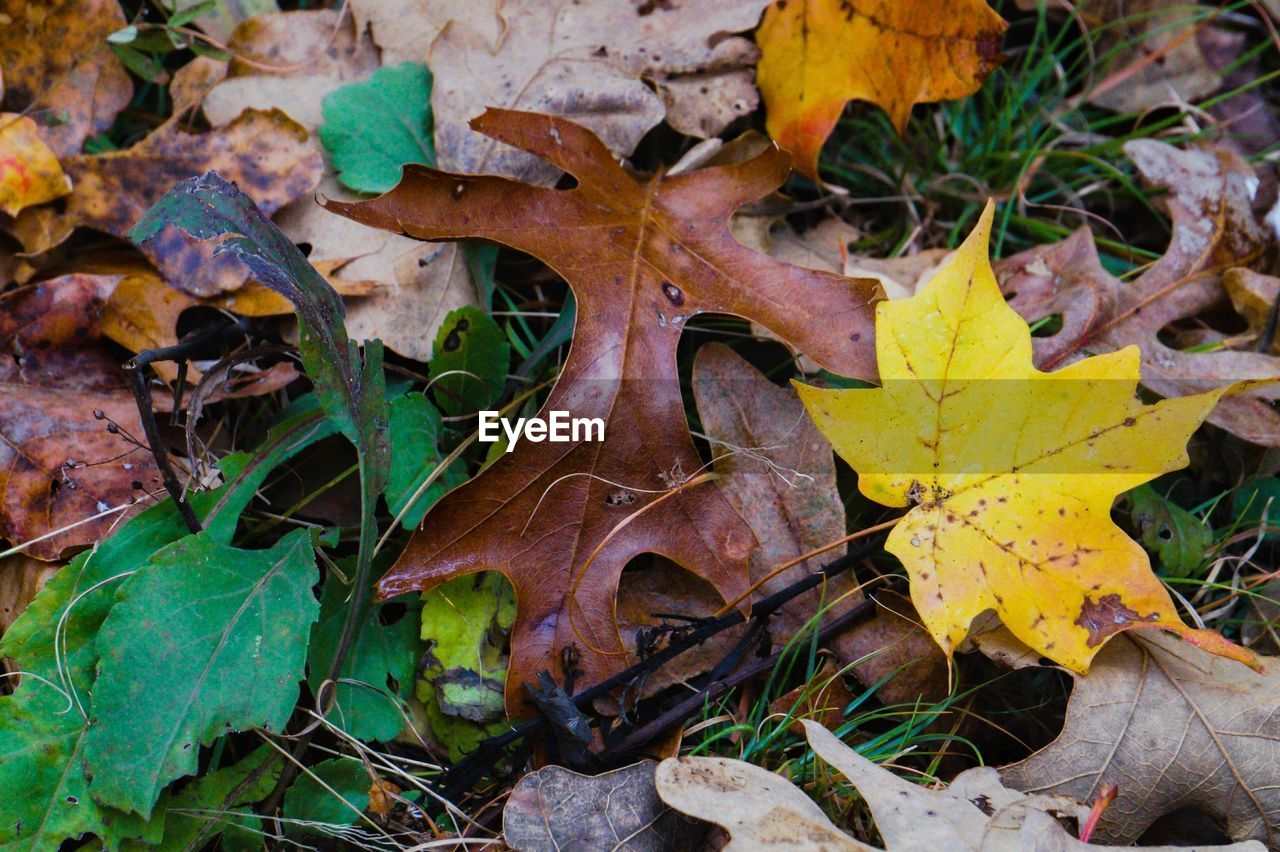 plant part, leaf, autumn, dry, leaves, change, no people, nature, plant, day, field, land, close-up, maple leaf, growth, beauty in nature, leaf vein, falling, outdoors, natural condition, fall
