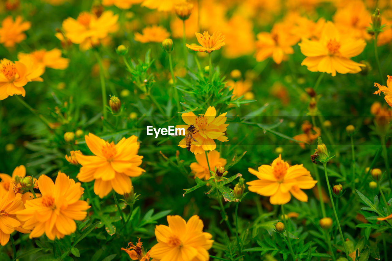 flowering plant, flower, fragility, vulnerability, freshness, petal, beauty in nature, plant, growth, flower head, inflorescence, close-up, nature, field, yellow, no people, land, day, high angle view, green color, outdoors