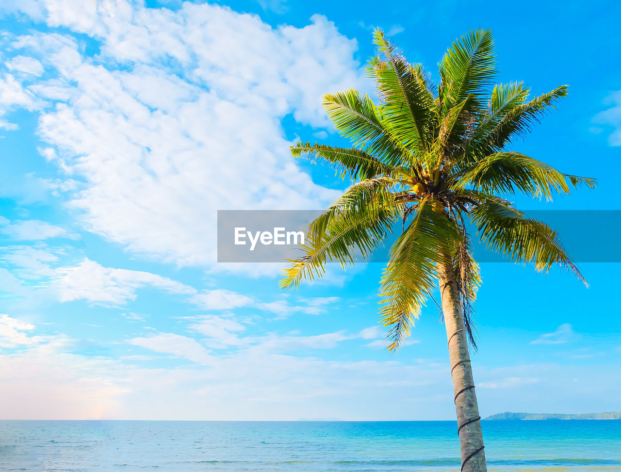 sky, palm tree, tropical climate, water, sea, tree, beauty in nature, horizon over water, cloud - sky, tranquility, scenics - nature, horizon, nature, plant, tranquil scene, growth, coconut palm tree, beach, outdoors, no people, tropical tree, palm leaf, turquoise colored