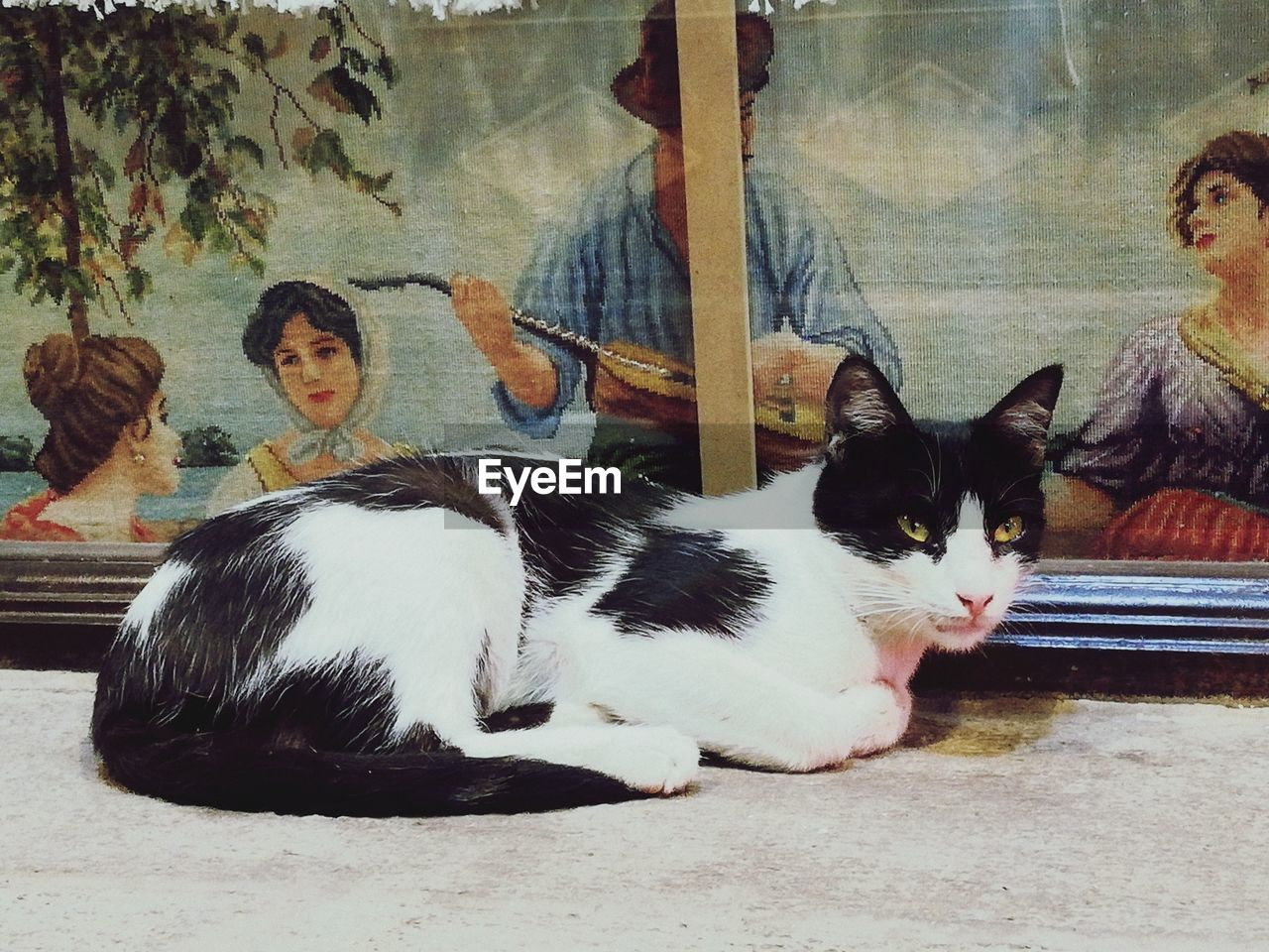 PORTRAIT OF CAT SITTING ON FLOOR IN KITCHEN