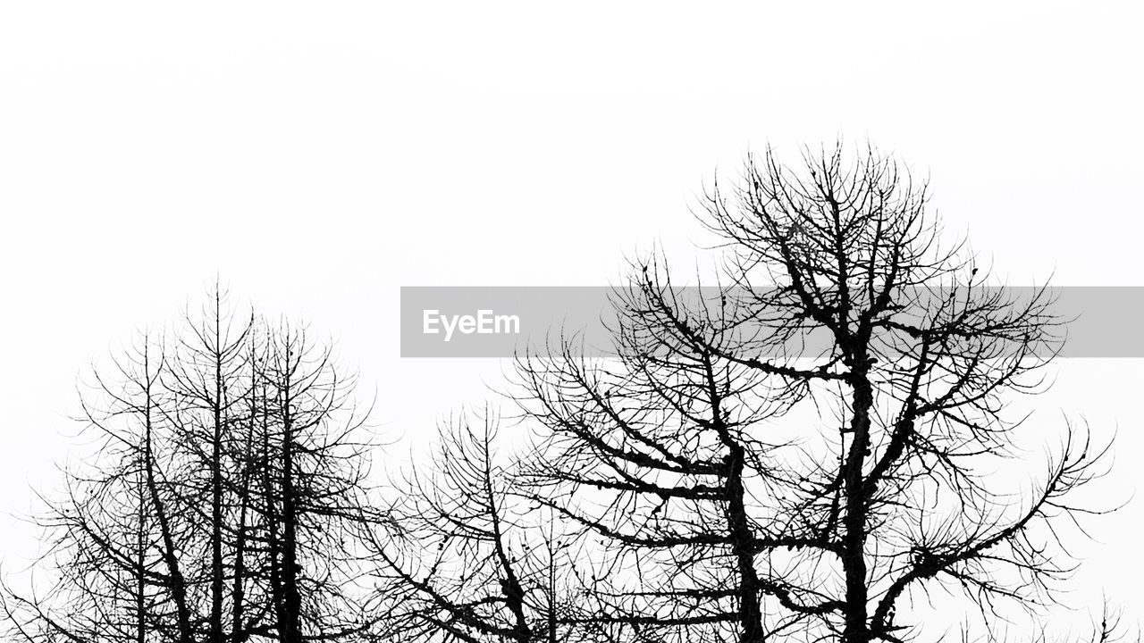 bare tree, tree, branch, nature, low angle view, clear sky, beauty in nature, outdoors, sky, tranquility, winter, no people, day, scenics