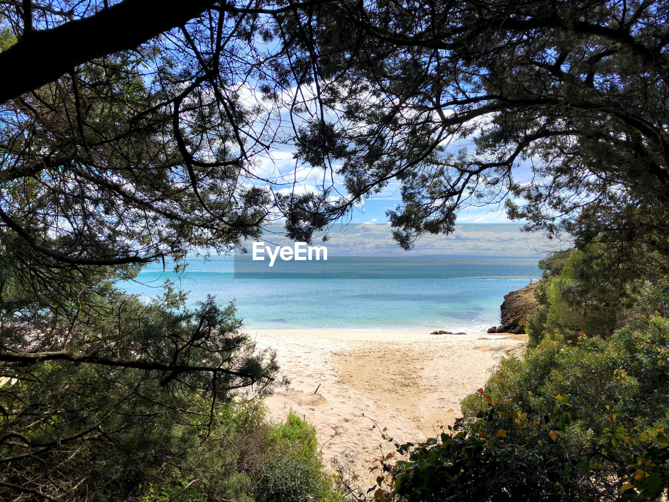 SCENIC VIEW OF SEA AGAINST TREES
