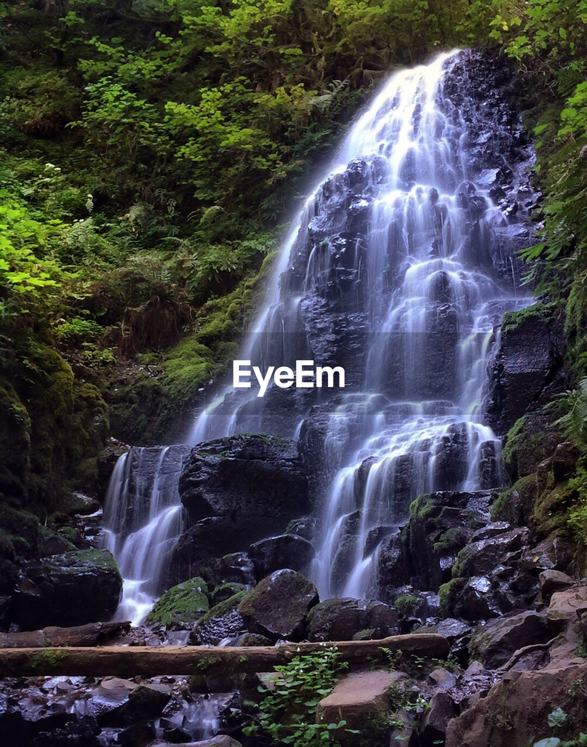 VIEW OF WATERFALL IN A FOREST