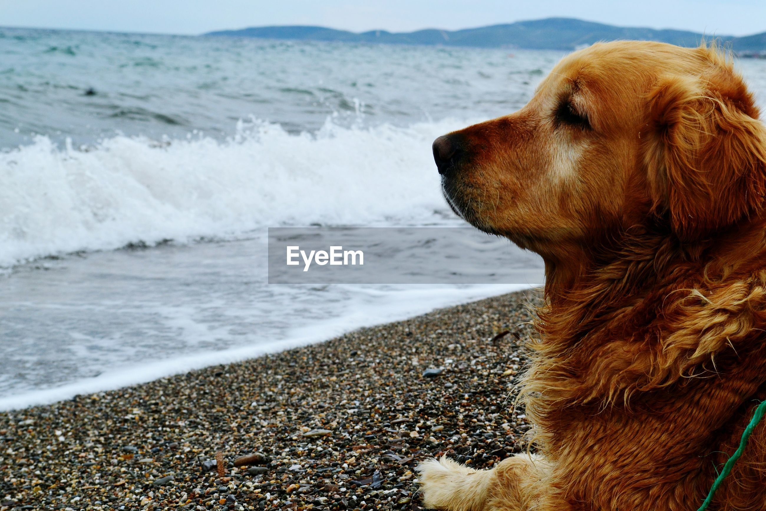 sea, water, beach, one animal, shore, animal themes, mammal, wave, nature, domestic animals, dog, pets, outdoors, sand, close-up, no people, horizon over water, beauty in nature, day, sky