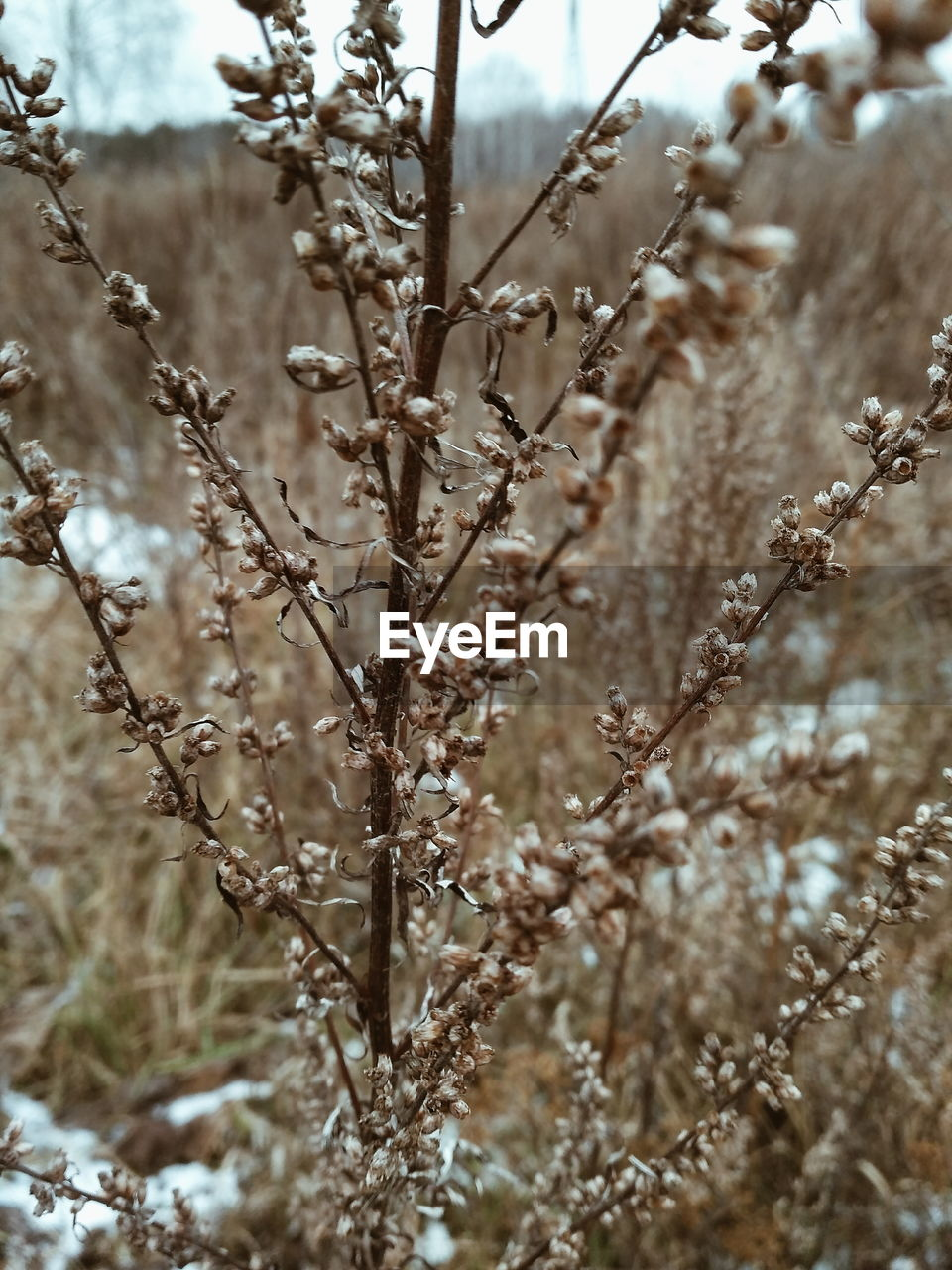 nature, day, no people, winter, plant, outdoors, focus on foreground, beauty in nature, growth, close-up, tranquility, snow, cold temperature, dried plant, branch, tree