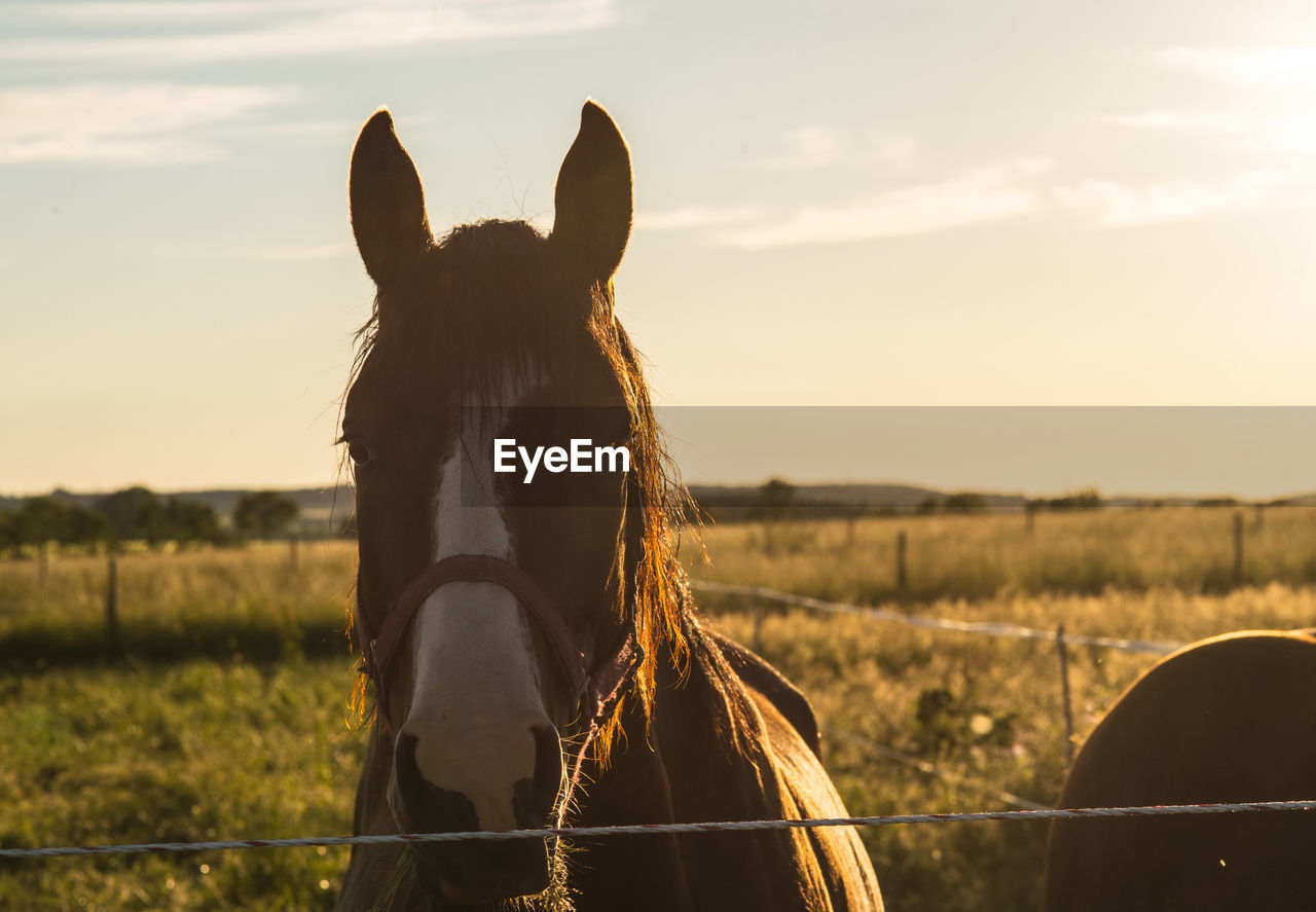 Horse On Grassy Field At Ranch During Sunny Day