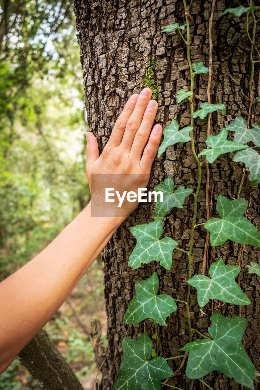 plant, human body part, tree, human hand, hand, leaf, tree trunk, trunk, plant part, one person, nature, green color, growth, real people, body part, day, lifestyles, women, land, outdoors, finger, care, human limb, gardening