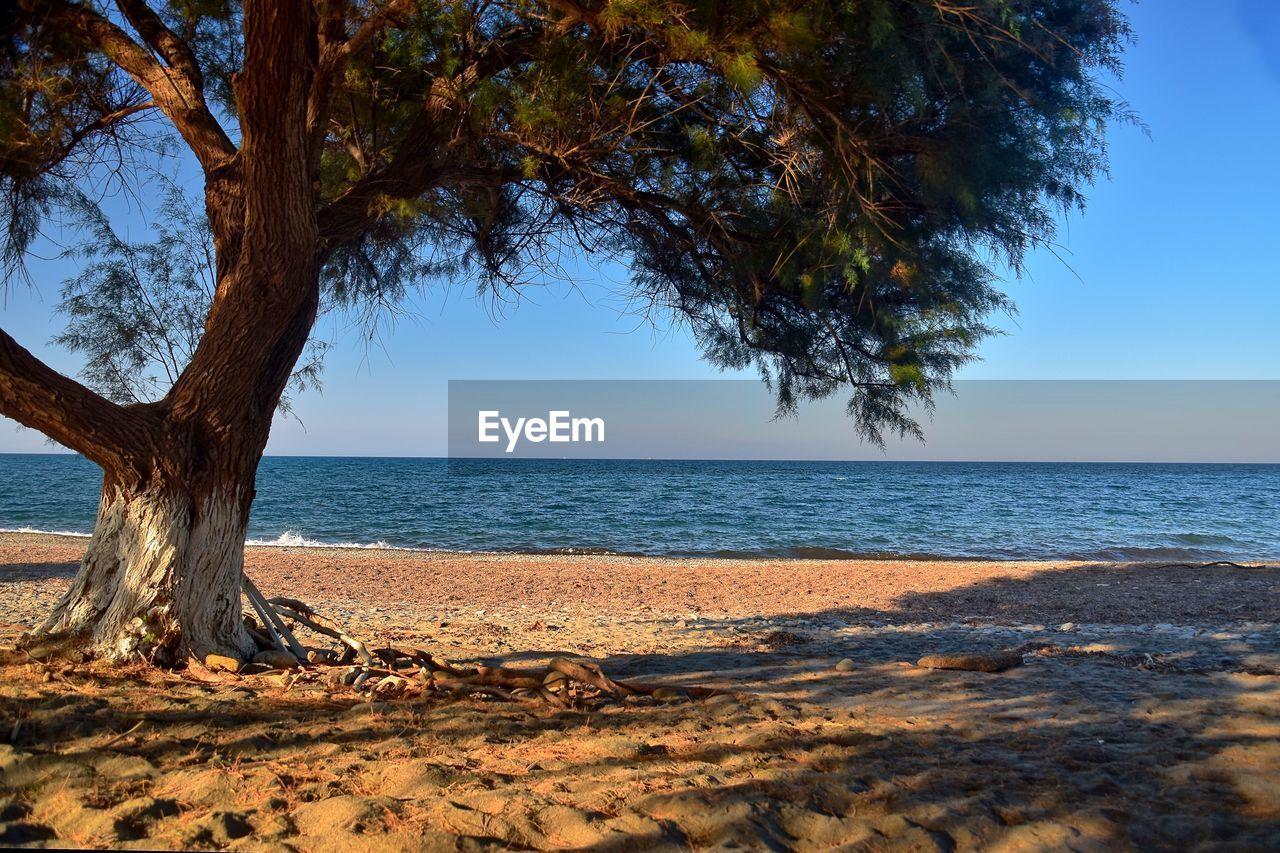 TREE ON BEACH AGAINST CLEAR SKY