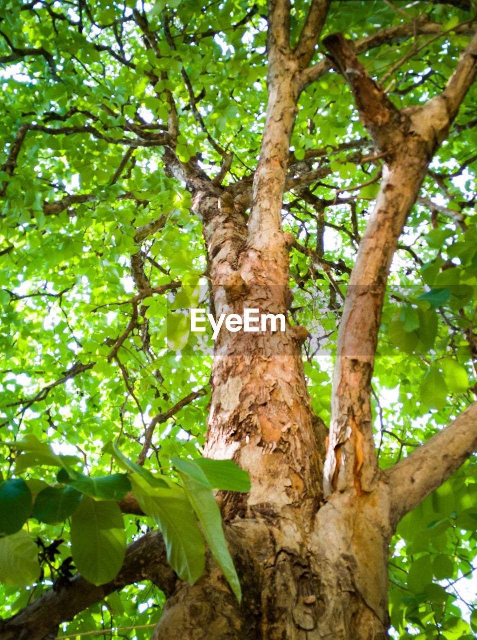 plant, tree, tree trunk, trunk, low angle view, nature, day, no people, plant part, growth, leaf, outdoors, branch, forest, beauty in nature, green color, close-up, tranquility, focus on foreground, foliage