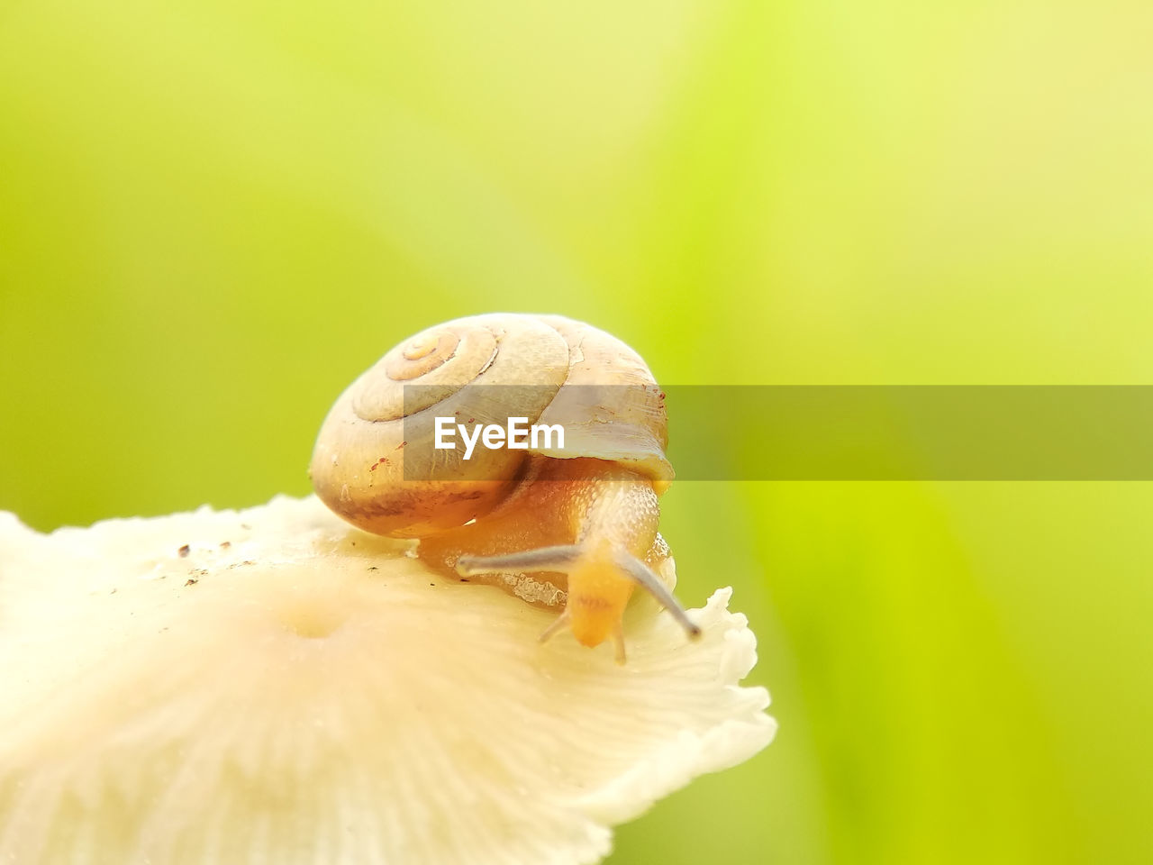 close-up, animal wildlife, one animal, animals in the wild, animal, animal themes, no people, invertebrate, focus on foreground, animal shell, nature, shell, selective focus, day, snail, gastropod, mollusk, beauty in nature, plant, vulnerability