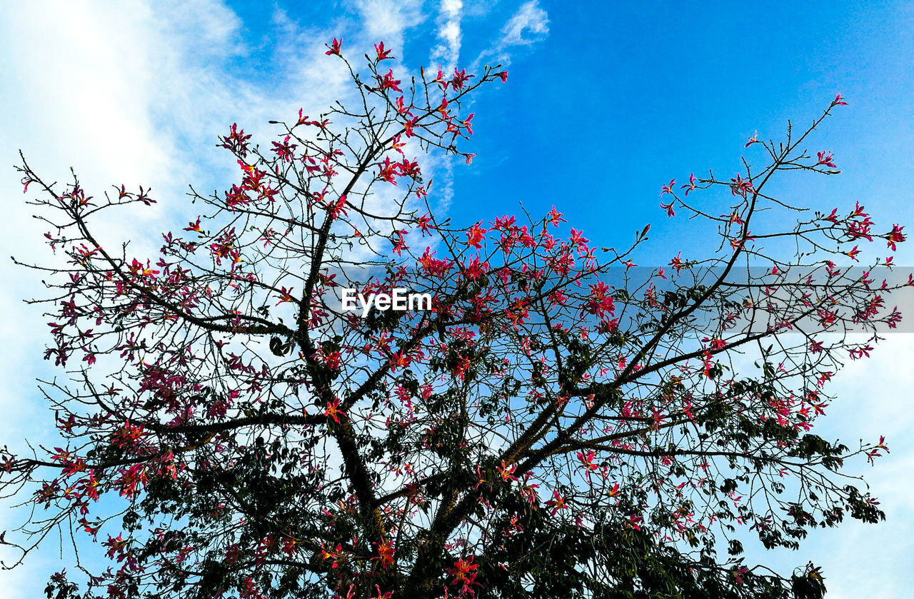 flower, growth, tree, low angle view, beauty in nature, branch, nature, freshness, blossom, sky, springtime, day, no people, fragility, outdoors, close-up, flower head