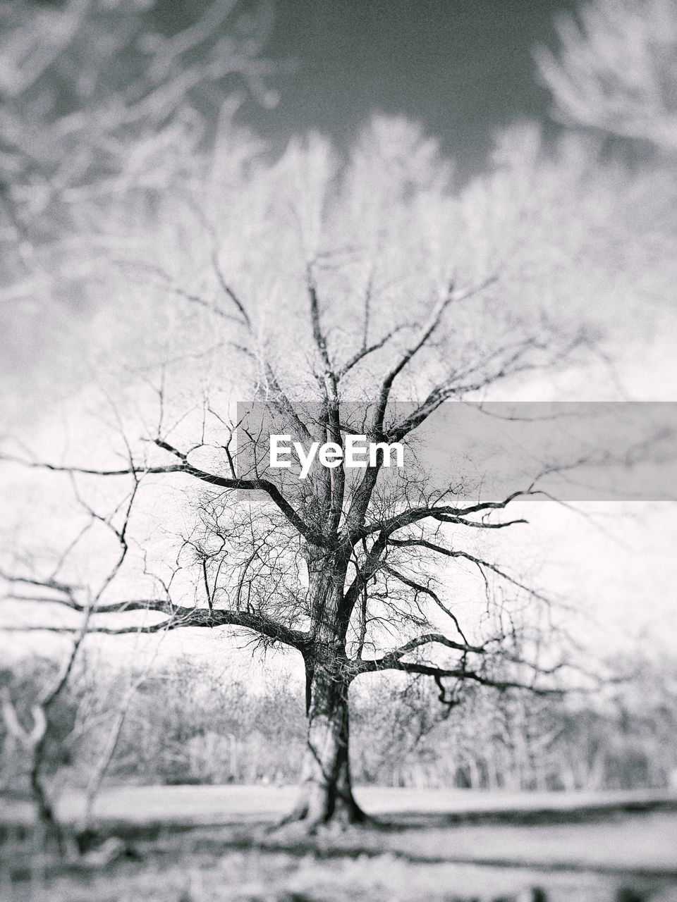 bare tree, tree, lone, branch, tranquility, nature, tree trunk, landscape, beauty in nature, day, winter, sky, outdoors, no people