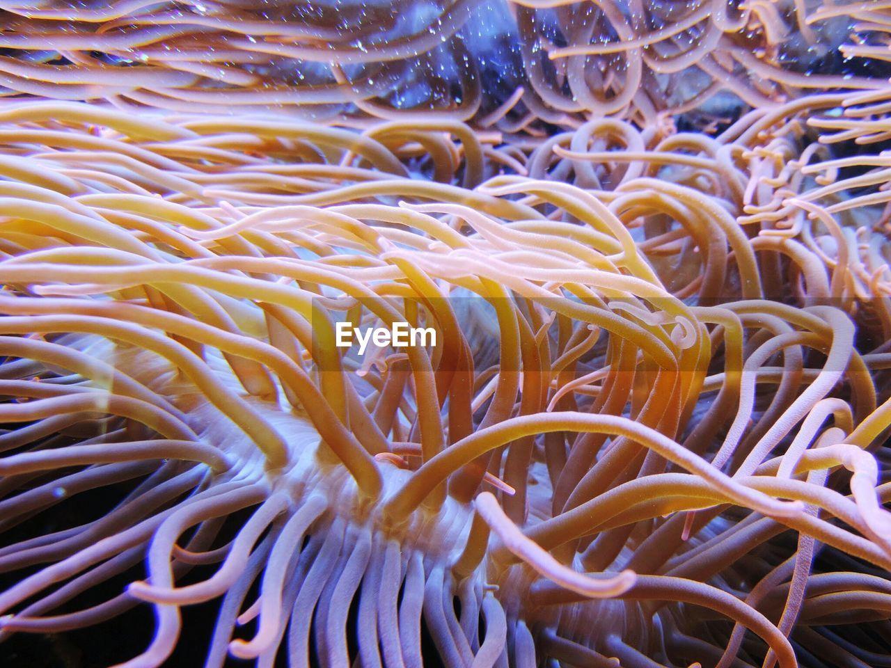 Close-Up Of Reef Underwater