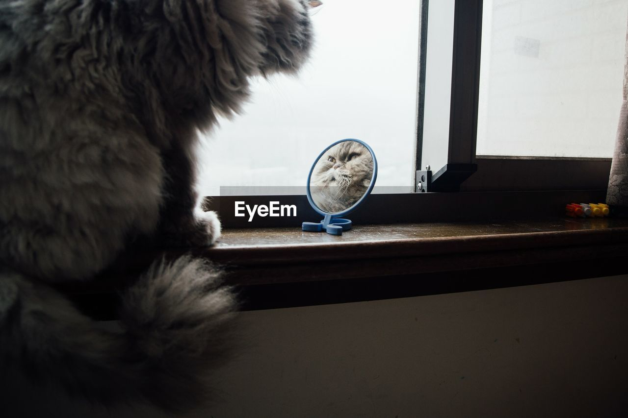 Close-Up Of Cat Looking At Mirror