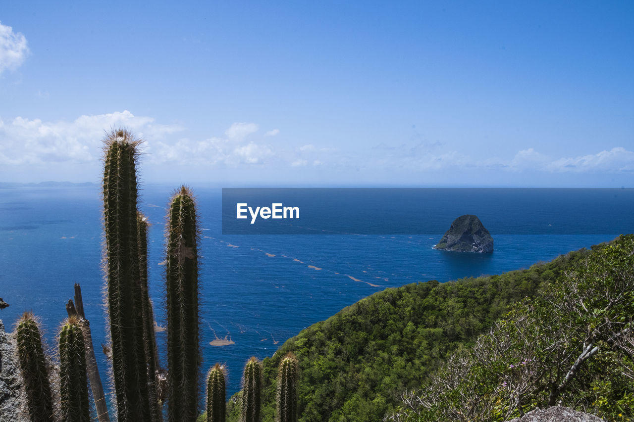 water, sea, sky, scenics - nature, tranquil scene, tranquility, beauty in nature, plant, horizon over water, horizon, nature, growth, no people, land, day, blue, cactus, cloud - sky, non-urban scene, outdoors