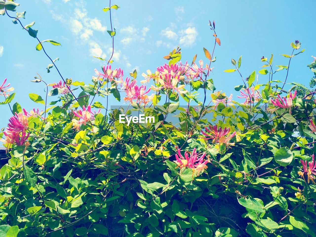 flower, growth, beauty in nature, nature, petal, fragility, plant, day, freshness, no people, outdoors, blooming, pink color, leaf, sunlight, sky, flower head, close-up