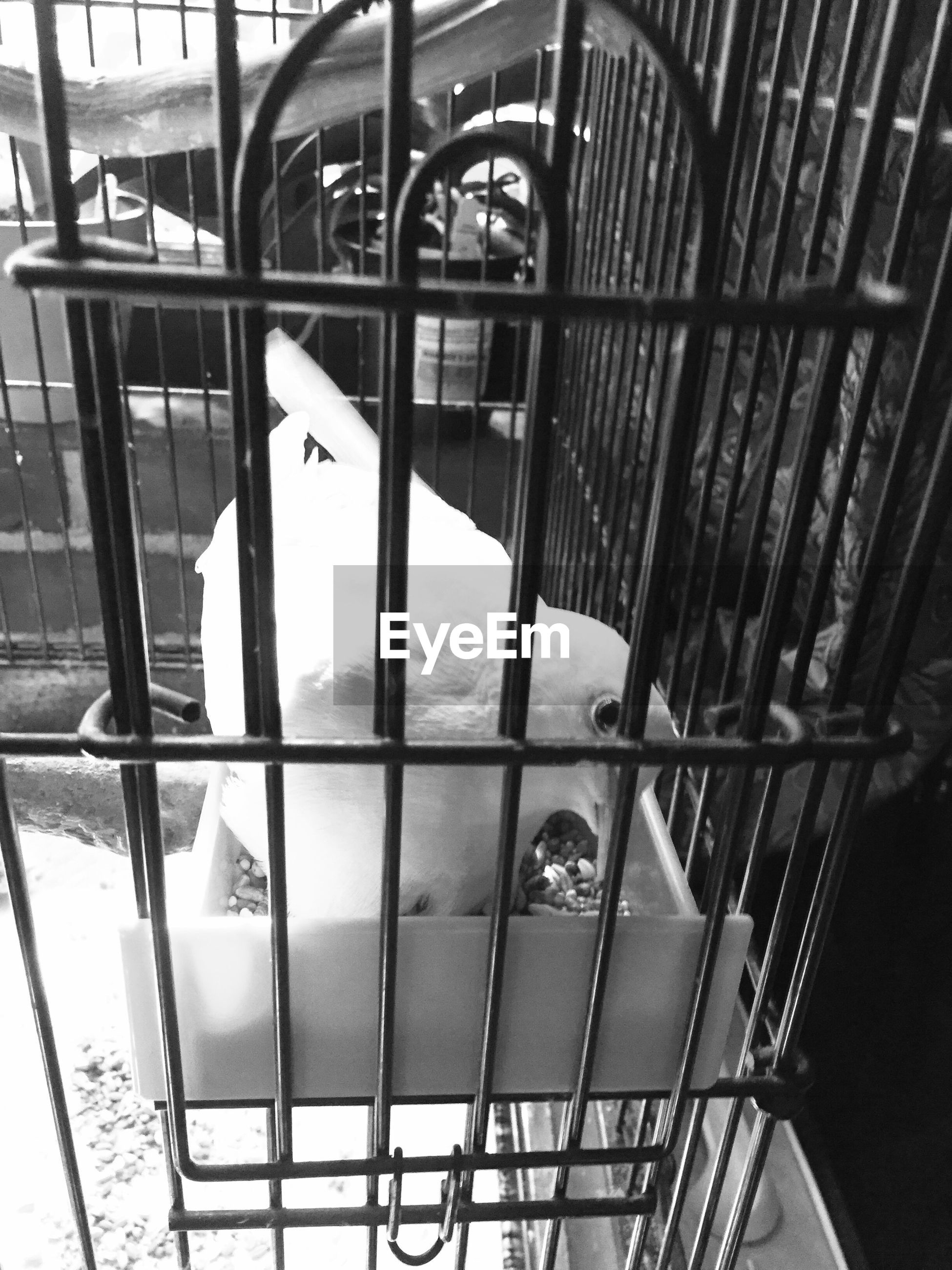 High angle view of dove in cage