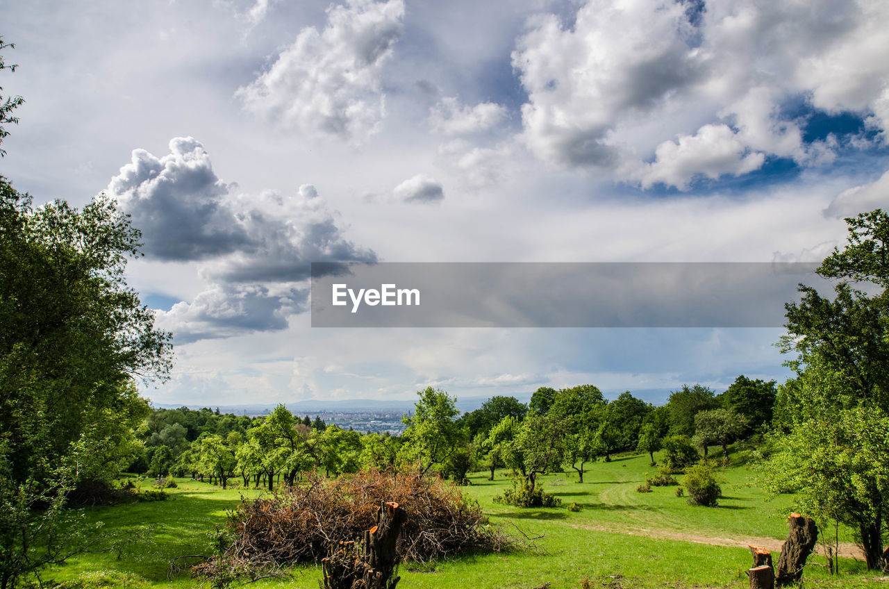 plant, cloud - sky, tree, sky, beauty in nature, green color, tranquil scene, tranquility, landscape, scenics - nature, grass, nature, environment, growth, day, land, field, non-urban scene, no people, idyllic, outdoors
