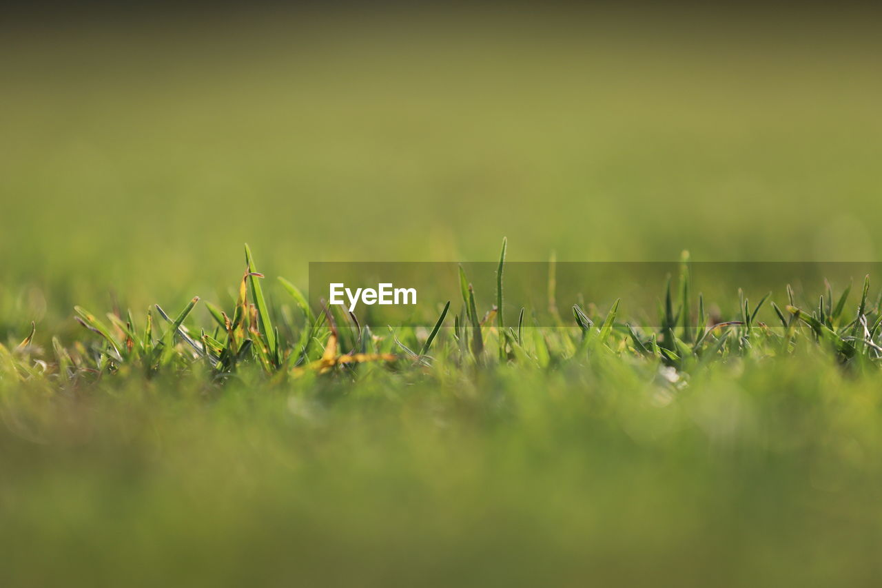 A background photo of the green grass