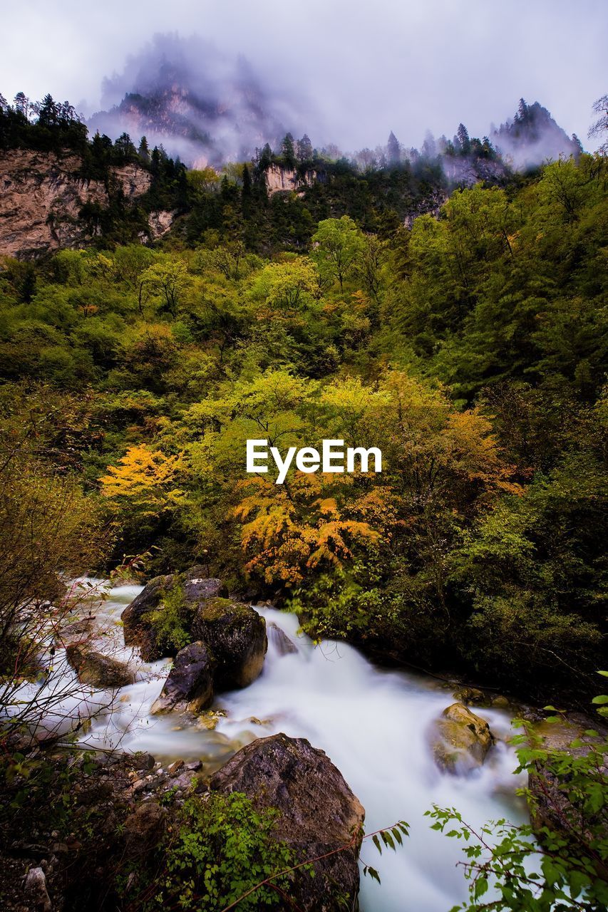 plant, beauty in nature, tree, water, scenics - nature, rock, nature, tranquil scene, tranquility, no people, rock - object, solid, flowing water, growth, forest, land, environment, non-urban scene, day, flowing, outdoors
