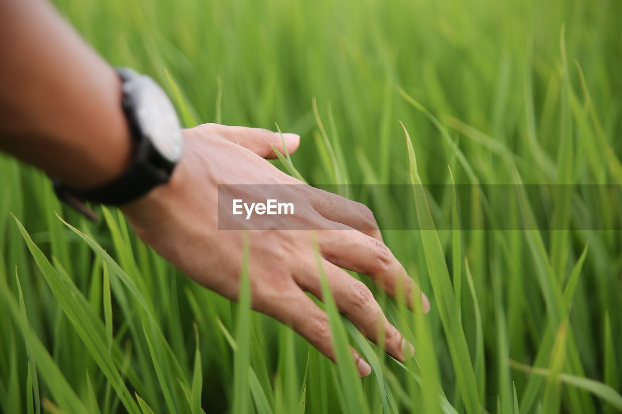 Close-up of hand against grass in field