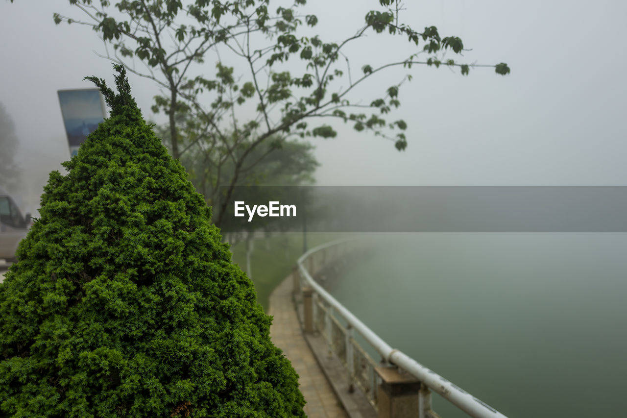 plant, tree, green color, no people, nature, growth, day, focus on foreground, beauty in nature, tranquility, fog, sky, outdoors, water, built structure, railing, architecture, tranquil scene, scenics - nature