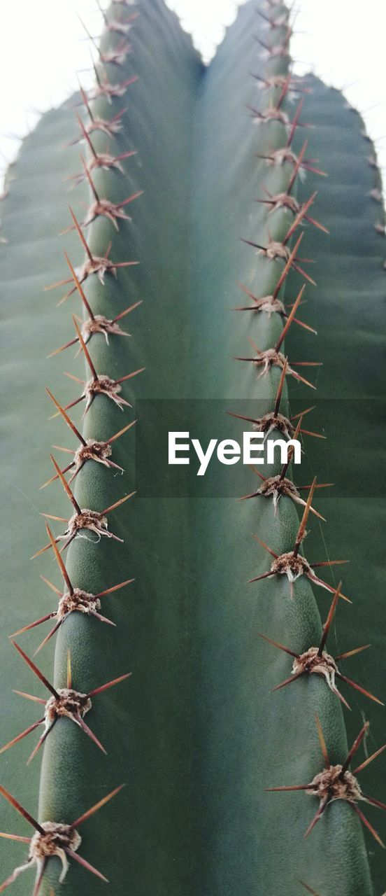 thorn, cactus, growth, nature, spiked, plant, no people, close-up, aloe vera plant, uncultivated, herbal medicine, outdoors, beauty in nature, day