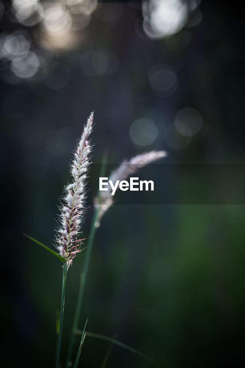 focus on foreground, nature, growth, close-up, green color, no people, outdoors, day, beauty in nature, plant, freshness, fragility