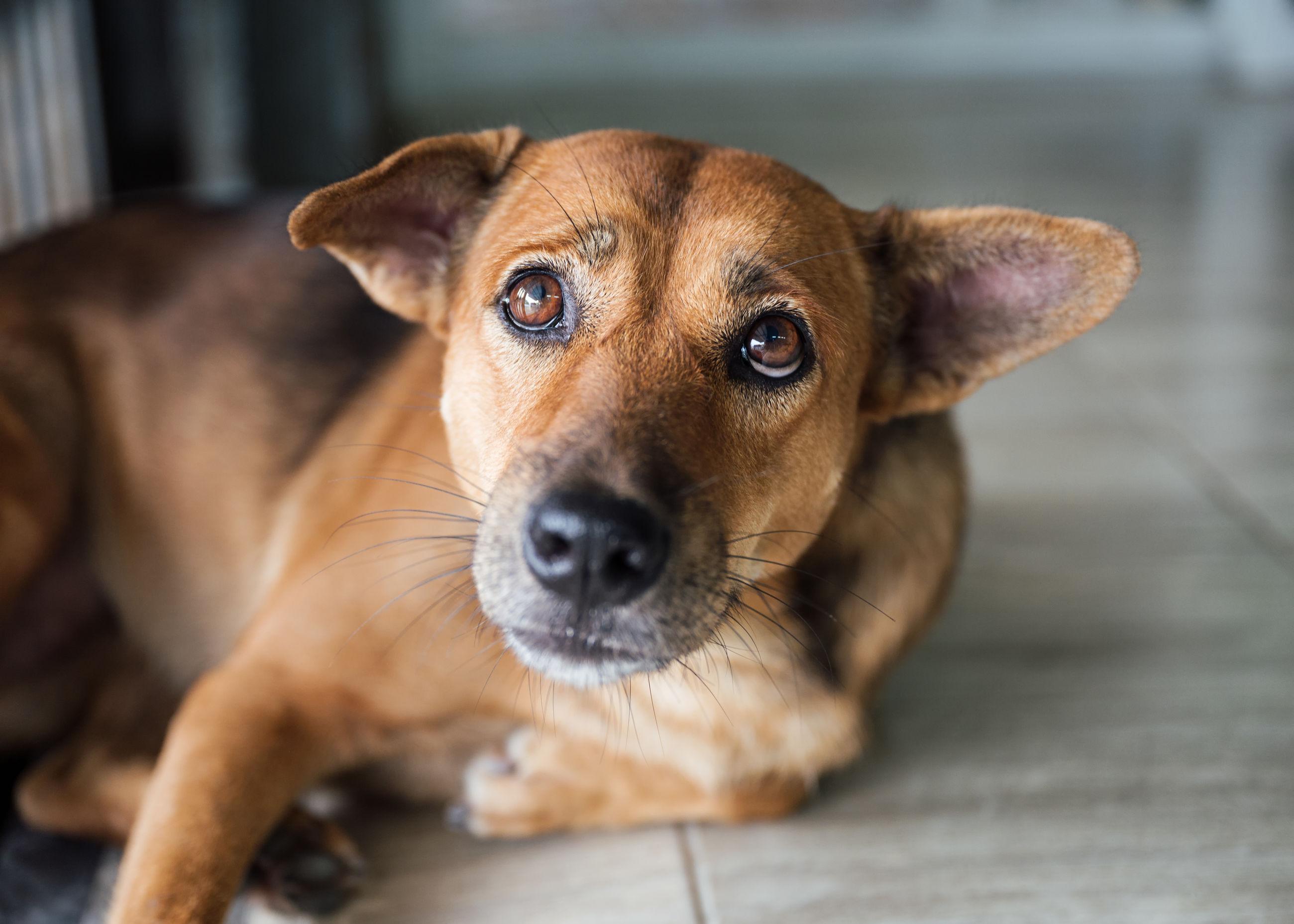 PORTRAIT OF DOG ON FLOOR